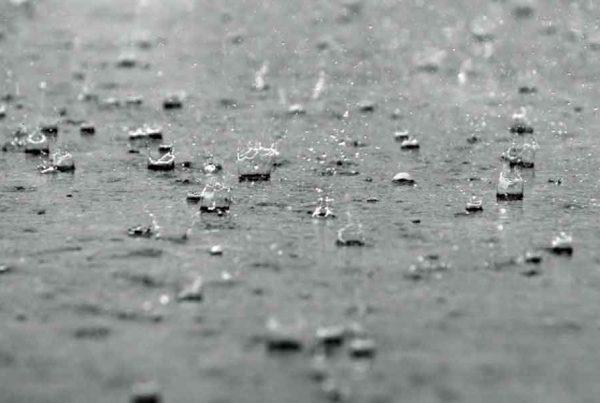 Hum-ID Regen (Hintergrund)